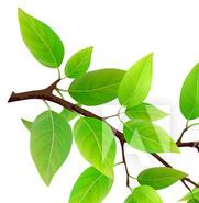 Natural farming tea